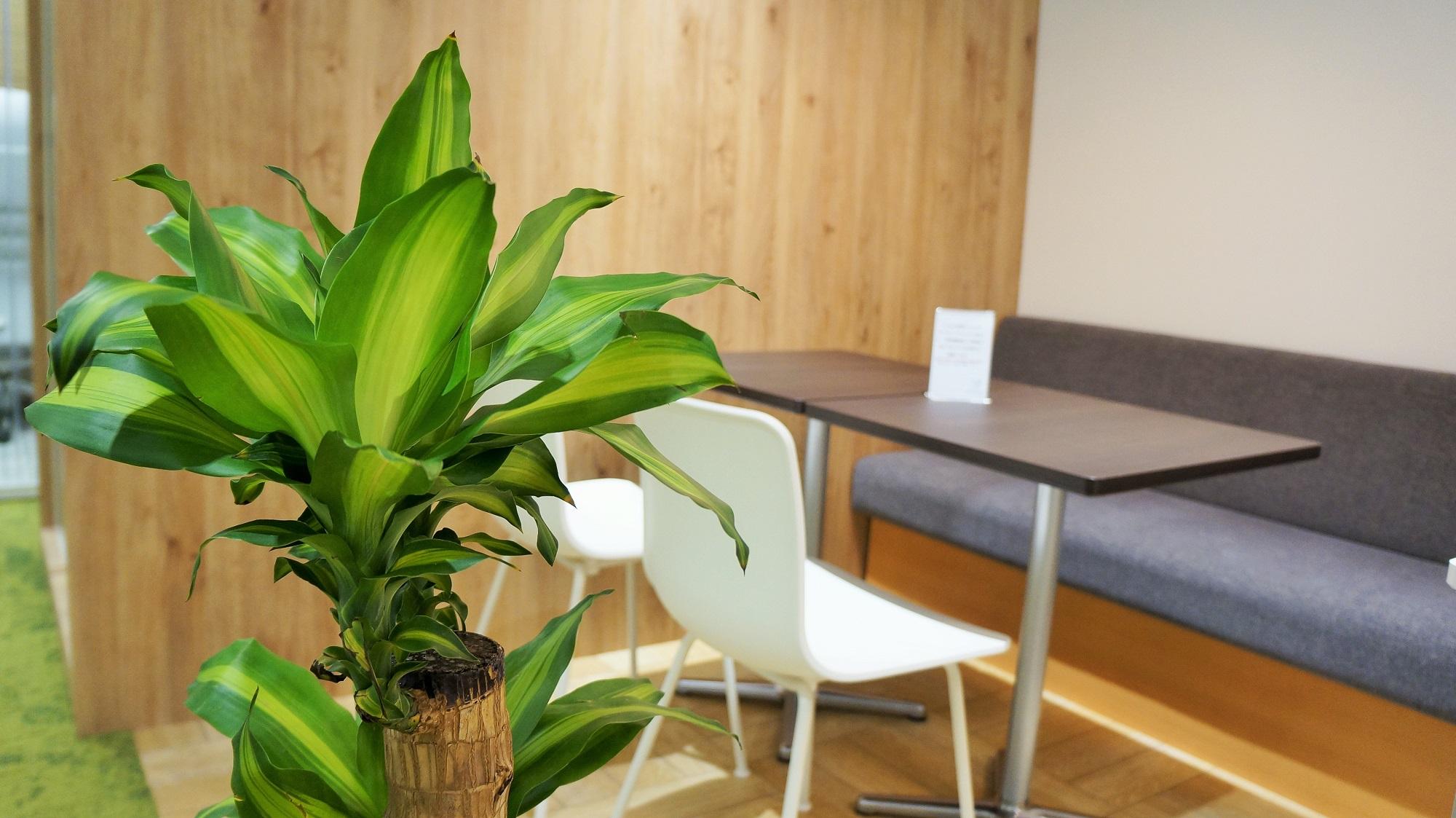 観葉植物 コワーキングスペース