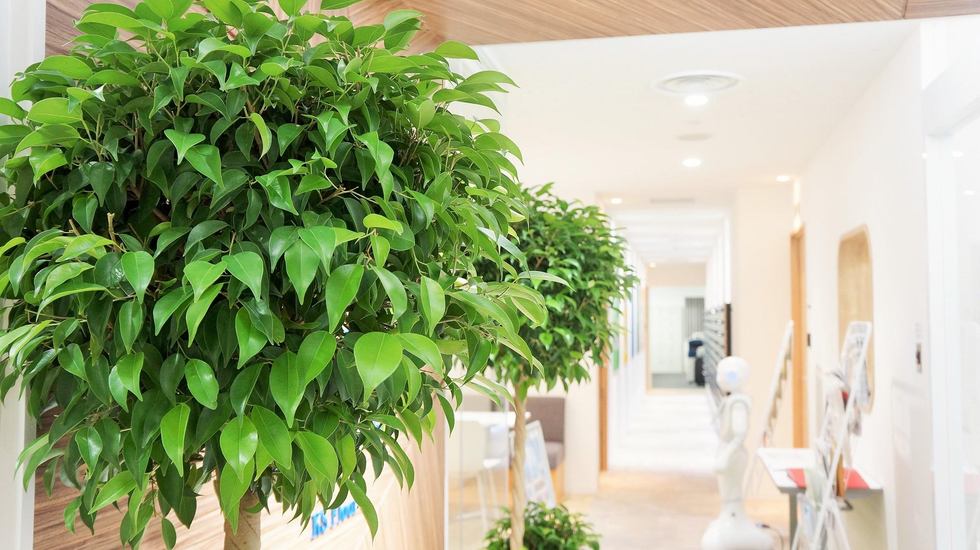 観葉植物 シェアオフィス